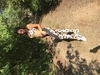 Podprsenka Gym Glamour Leopard, S - 6/6
